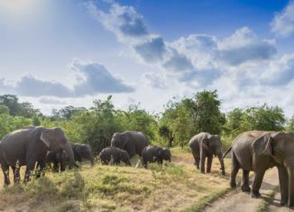 Sri Lanka tourism India