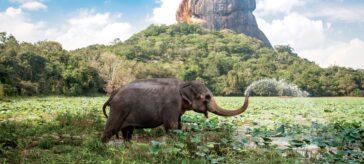 Ceylon Travel Consultancy forays into Indian market